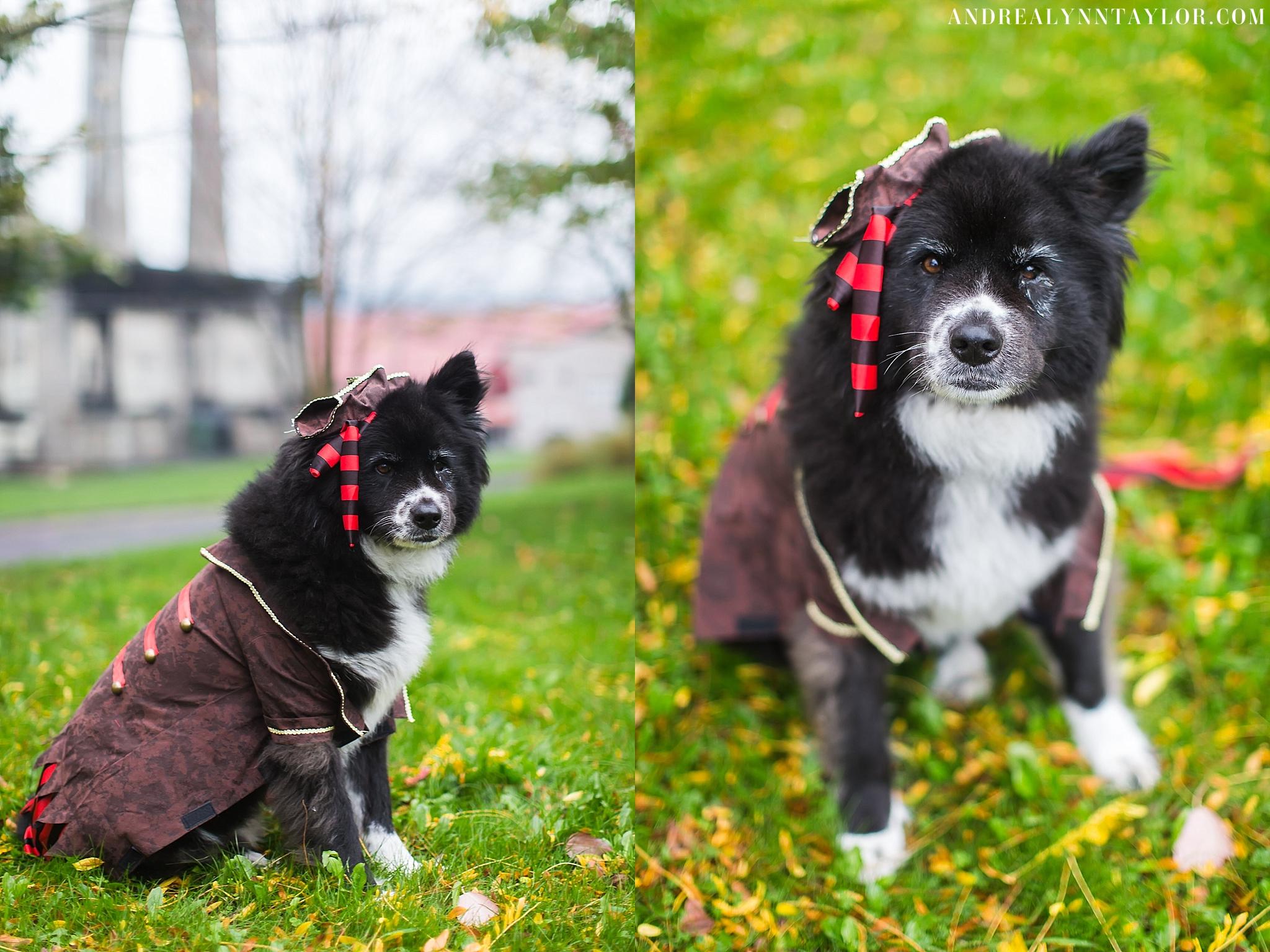personal photographer portland oregon - happy halloween! | andrea zajonc